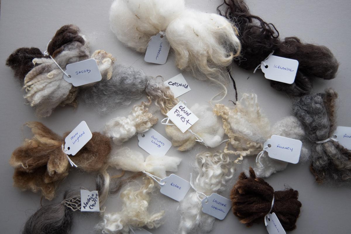 Spinning Sheep Breed wool locks