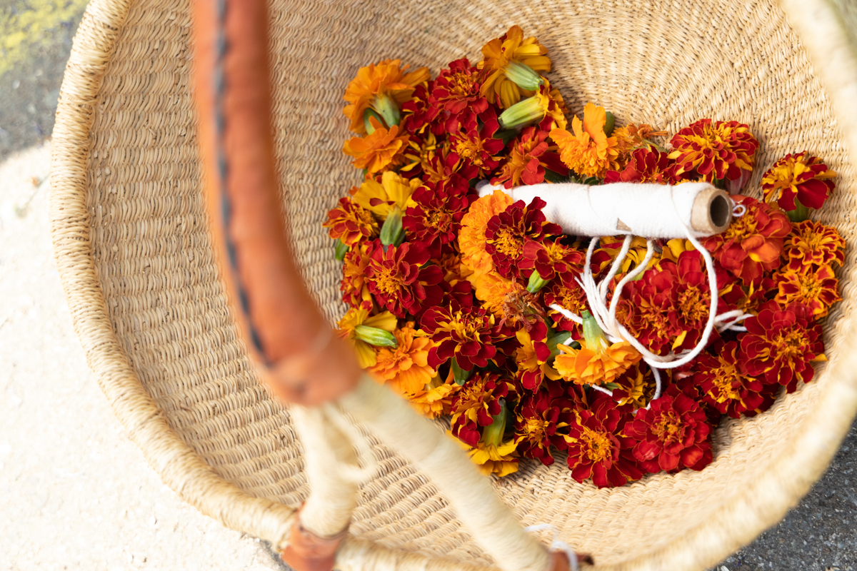 dye garden marigold basket ffrench
